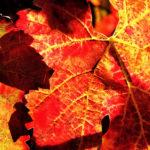 portinari autunno (11)