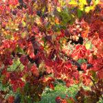 portinari autunno (12)