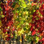 portinari autunno (14)
