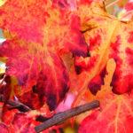 portinari autunno (23)