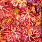 portinari autunno (25)