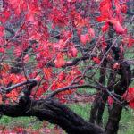 portinari autunno (26)