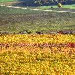 portinari autunno (6)