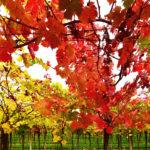 portinari autunno (7)